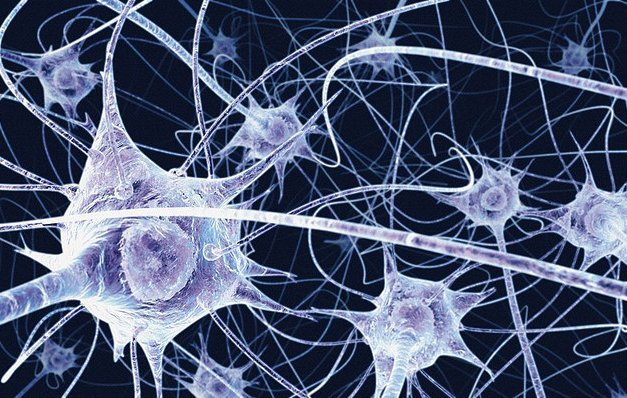 Supplements improving memory