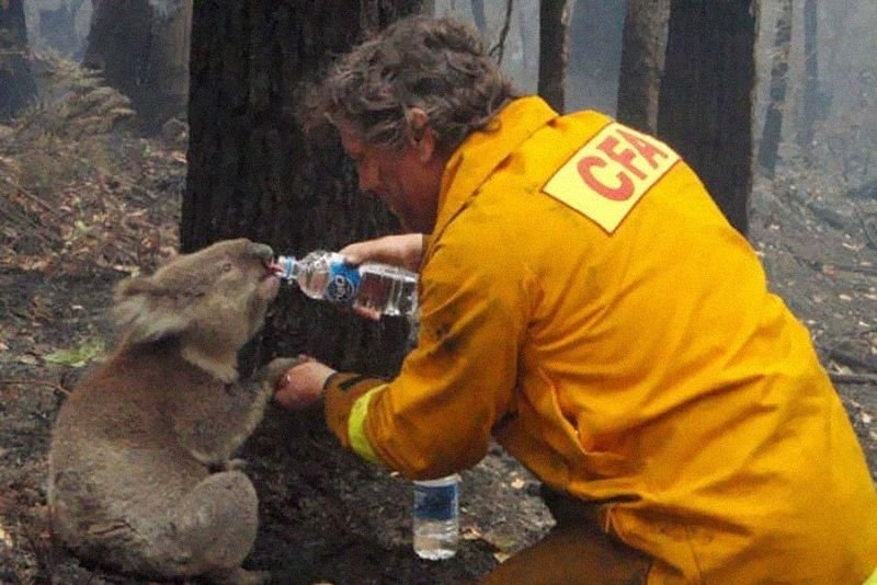1. A Koala is fed water by a firefighter during the Black Saturday bushfires in Australia, 2009.