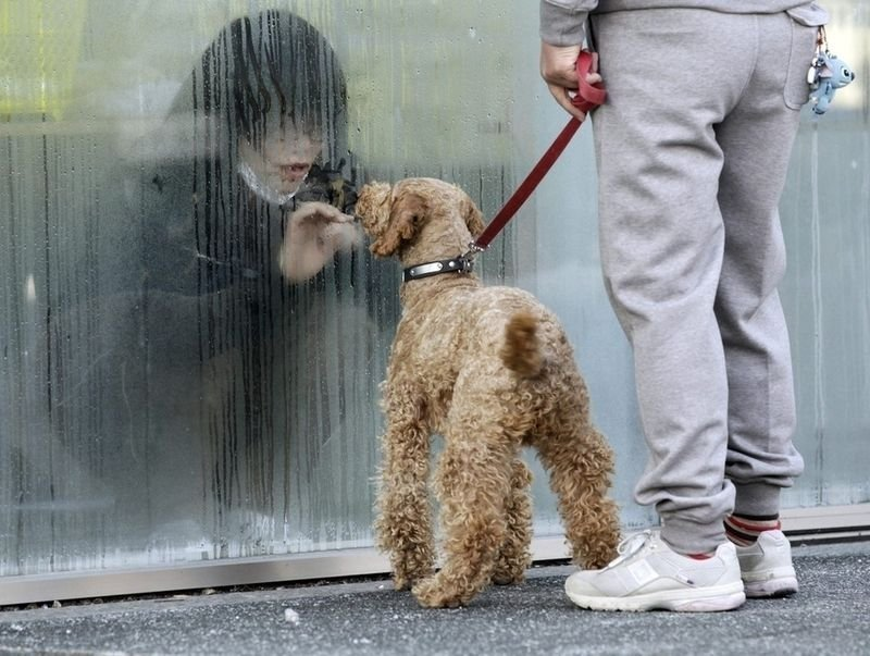 6. A Japanese girl placed in isolation for radiation screening looks at her dog through the window.