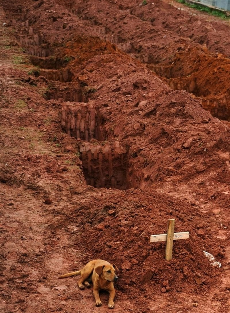 7. A dog sits next to the grave of its owner, who passed away in the disastrous landslides near Rio de Janeiro in 2011.