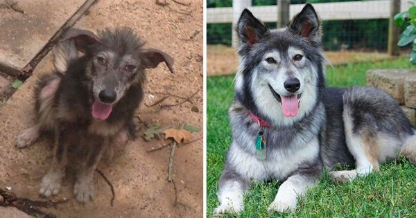15 Before After Photos Of Adopted Doggos That Show How Love Can Transform A Broken Soul