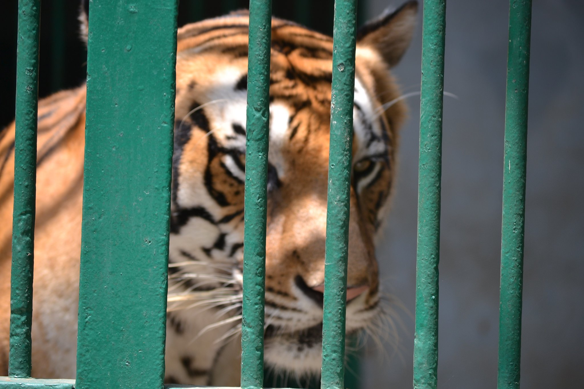 Image result for irregularities in india zoos