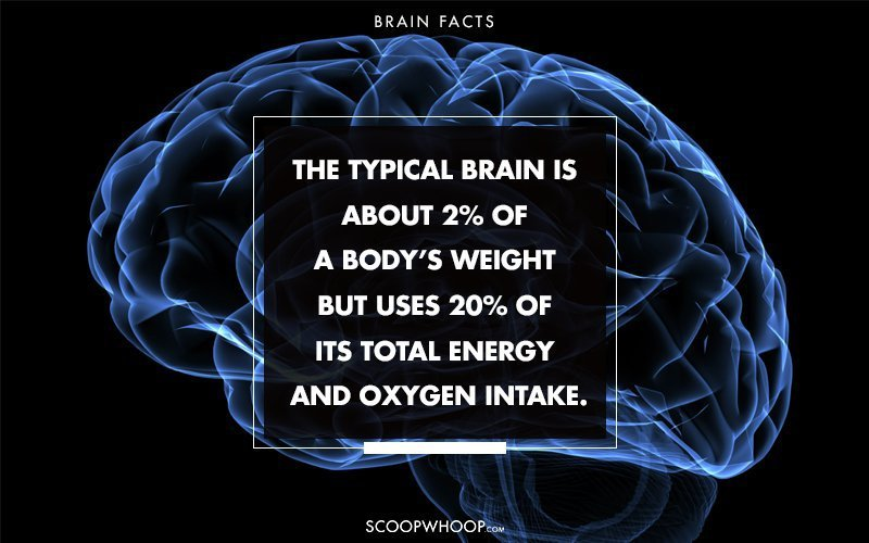 37 Fascinating Facts About The Human Brain That You Probably Had No ...
