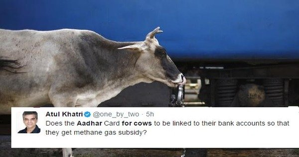 Image result for cow aadhar card scoopwhoop