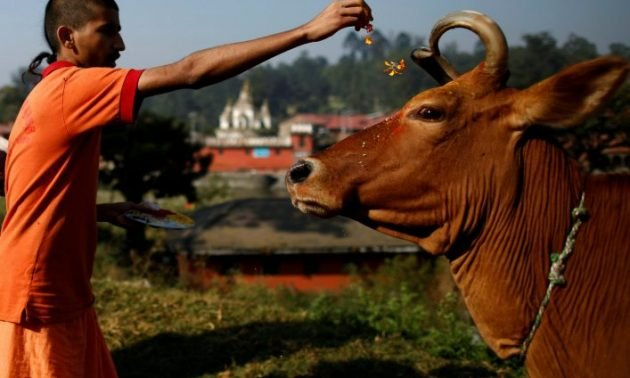 Cow Is A Hospital In Itself'  A Look At Choicest Things