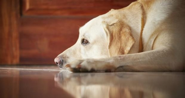 If Pet Owners Abide By The Munil Laws Regarding Pets Then No Civic Body Has Right To Ban Or Their From Society
