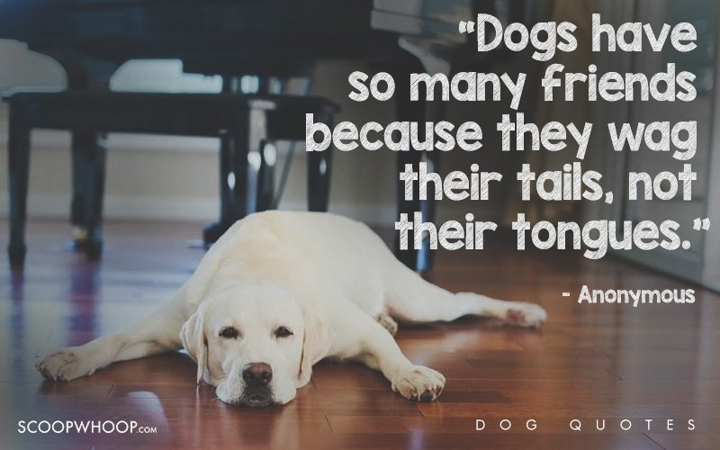 25 Beautiful Quotes That Explain Exactly Why Dogs Are Man's Best Friends