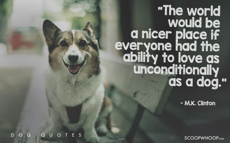 25 Beautiful Quotes That Explain Exactly Why Dogs Are Man S Best Friends