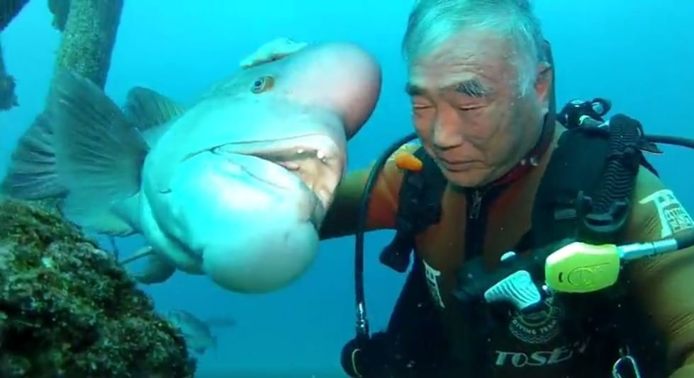 Afbeeldingsresultaat voor japanese divers best friend fish great with kiss