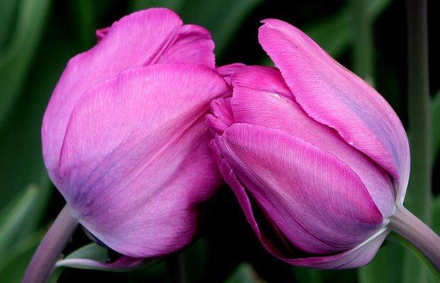 Image result for flowers kissing
