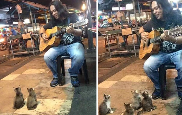 These Four Kittens Will Make You Realize That Music Has No Boundaries