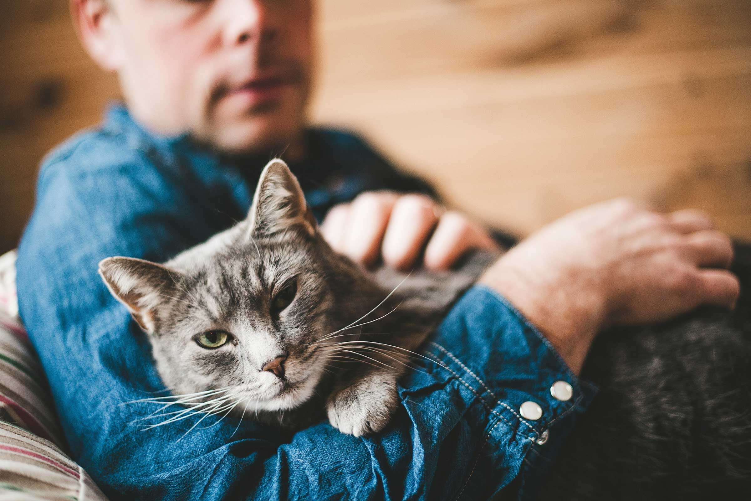 Can cats understand human language