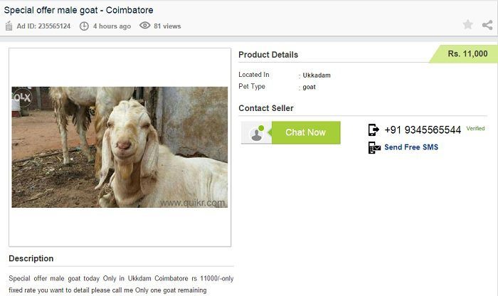 Goat For Sale In Pune In Olx
