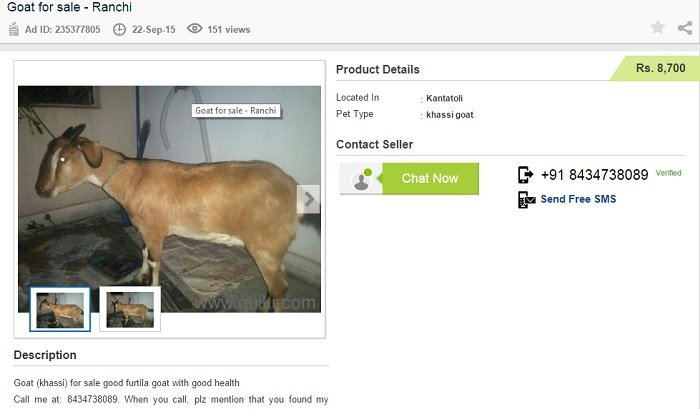 Would You Believe You Can Buy Goats Online This Bakrid!