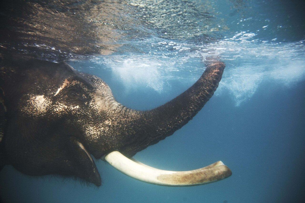 Swim With Baby Elephants On The Beach Must Do