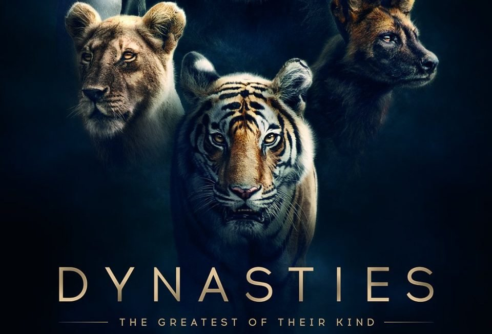 The Powerful Trailer Of BBC's Documentary 'Dynasties', Starts With A Roar & Ends With Goosebumps