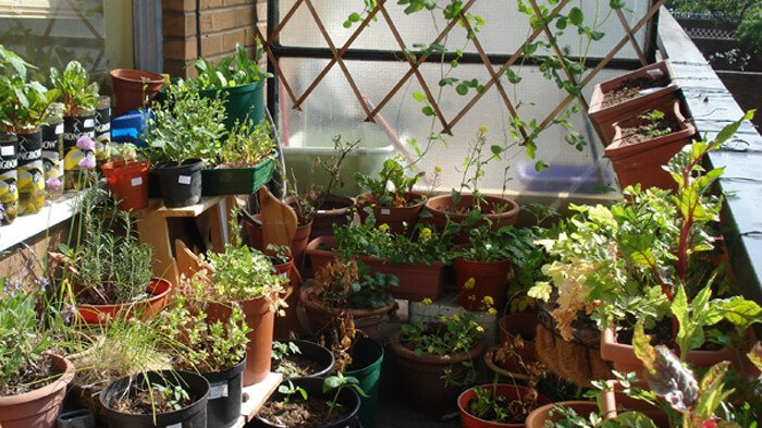 7 Indian Herbs You Can Grow Easily in Your Own Balcony
