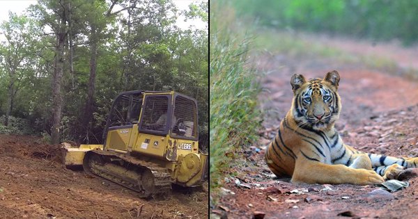 10 Times Nature Lost To Development Because F*ck The Environment
