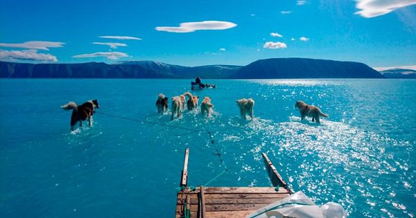 This Viral Photo Of Sled Dogs Walking Through Water & Not Ice In Greenland Should Really Worry All Of Us