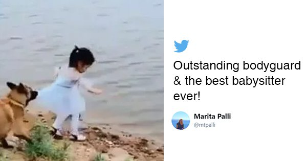 Twitter Wants To Hug The Doggo Who Saved A Little Girl From Falling Into A Lake