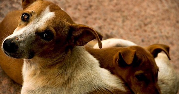 Telangana Civic Body Allegedly Slaughtered 40 Dogs, Video Of Them Dumping The Corpses Goes Viral
