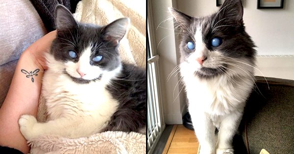 Meet Louie, A Blind Cat Who Has Been Winning Hearts On The Internet