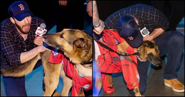 Chris Evans Jumping Off A Comic-Con Panel Just To Pet A Doggo Is So Effing Pure