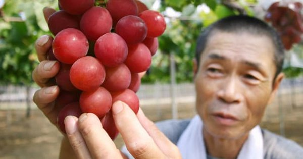 A Bunch Of Grapes Was Auctioned For ₹7.5 Lakh In Japan While You Were Bargaining For Free Dhaniya
