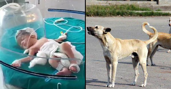 Stray Dogs Find Newborn Baby Girl Who Was Wrapped In Plastic & Dumped In A Drain By A Woman