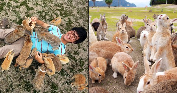 Here's Why This Island In Japan Is Home To Thousands Of Rabbits