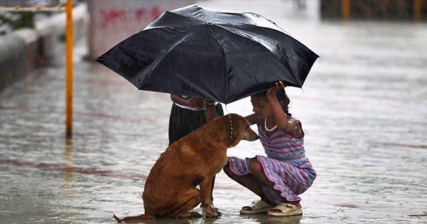 4 Simple Ways In Which You Can Help Stray Animals This Monsoon Season