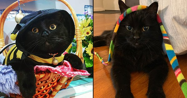 20 Adorable Black Cats That Are So Cute Ki Nazar Naa Lage