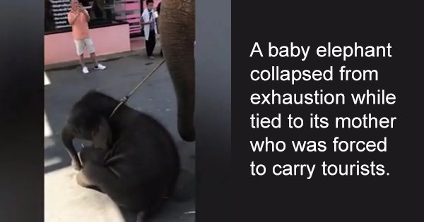 11 Hard-Hitting Cases Of Elephant Abuse That Are A Cry To Save These Majestic Creatures From Humans