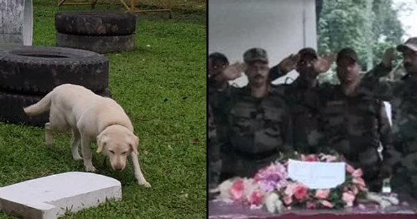 'A Saint & Soldier': Indian Army's Most Decorated Dog, Dutch Passes Away, Unit Pays Tribute