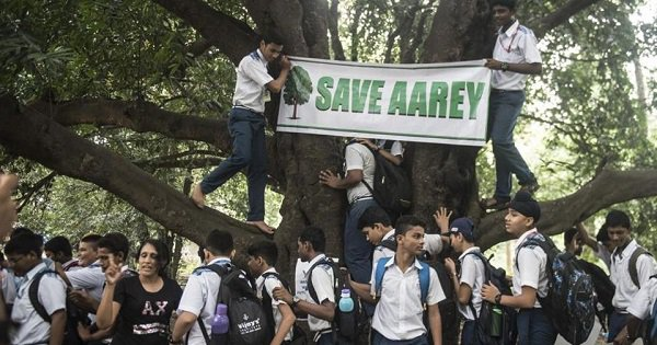 BMC Will Apparently Remove 623 Aarey Trees As They Are 'Harmful To The Environment'