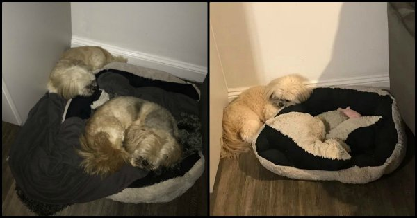 This Picture Of A Doggo Still Leaving Space For His Deceased Best Friend Is The Purest Thing Ever