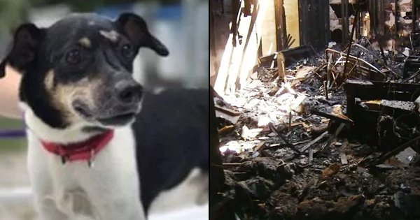 This Brave Doggo Sacrificed His Life While Saving His Entire Family From A House Fire