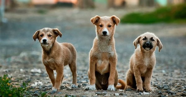 After Maharashtra, Another Case Of Animal Cruelty Surfaces As 40 Stray Dogs Poisoned To Death In AP