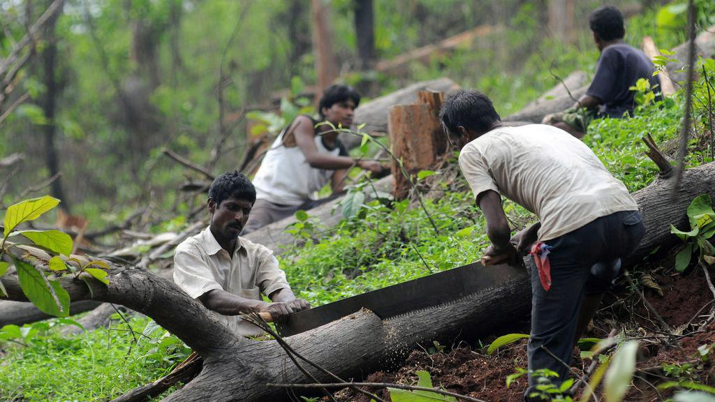 Cutting of trees in India