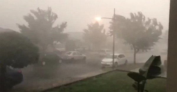 After Being Ravaged By Bushfires For Months, Rain Finally Brings Relief To Parts Of Australia