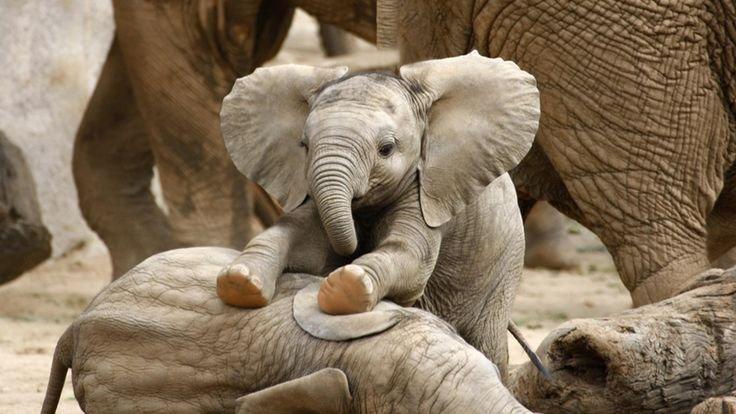21 Photos Of Cute Baby Animals