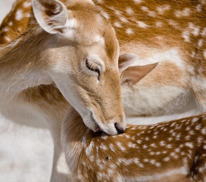 motherly love animal photography by goran anastasovski.