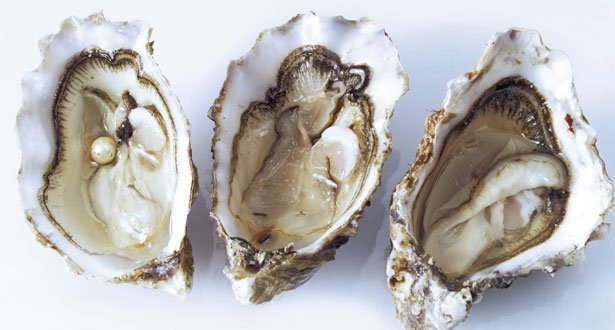 What do oysters do for you sexually